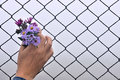 Wire fence holding hands and background have entered the flower the human hand Stock Photography