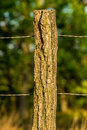 Wire fencing on a tree post Royalty Free Stock Photo