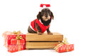 Wire haired dachshund with christmas suit on wooden crate red of santa claus luxury gifts isolated over white background Royalty Free Stock Images
