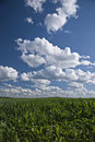 Wisconsin cornfields and skies Royalty Free Stock Images