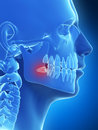 Wisdom teeth d rendered illustration of the Royalty Free Stock Images