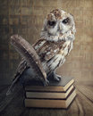 Wise owl Royalty Free Stock Photo