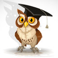 Wise owl in the cap of the graduate Royalty Free Stock Images