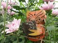Wise Owl wear glasses concentrate on reading in wide pink Chrysanthemum flower plantation