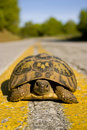 Wise turtle. Royalty Free Stock Photos
