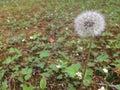 Wishflower Στοκ φωτογραφίες με δικαίωμα ελεύθερης χρήσης