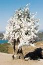 Wishing tree Royalty Free Stock Photos