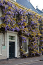 Wisteria flower on the front of a house Royalty Free Stock Image
