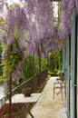 Wisteria flowers over balcony riverside terrace with canopy of Stock Images