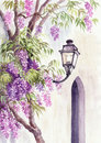 Wisteria and lantern among the blossom against the wall Royalty Free Stock Photos