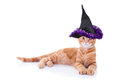Halloween Witch Cat Royalty Free Stock Photo