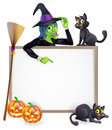 Witch halloween sign or banner with orange pumpkins and black s cats s broom stick and cartoon character Royalty Free Stock Photos