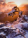 Witer in mountains tree under the snow Royalty Free Stock Image
