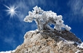 Witer in mountains tree under the snow Royalty Free Stock Photos