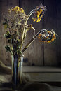 Withered bouquet with golden sunflower and tansy on rustic wood in sidelight selected focus Stock Images