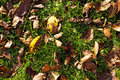 Withered leaves on my lawn autumn Stock Photo
