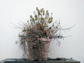 Withered plant a neglected dried out Royalty Free Stock Images