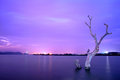 Withered tree in the river at nightfall Royalty Free Stock Photos