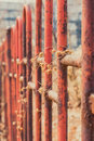 In withered vines rusty iron railings Royalty Free Stock Photo