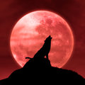 Wolf howling at the moon in the midnight halloween background with Royalty Free Stock Photography