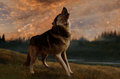 The wolf sings at sunset Royalty Free Stock Photo