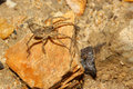 Wolf spider on rock in forest Royalty Free Stock Photo