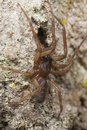 Wolf spider on wood Stock Images