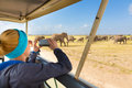 Woman on african wildlife safari lady taking a photo of herd of wild elephants with her smartphone open roof jeep Royalty Free Stock Images