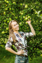 Woman in an apple tree garden during the harvest season. Young s Royalty Free Stock Photo