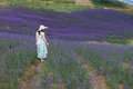 Woman'back in Lavender Field Royalty Free Stock Photo