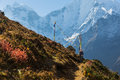 Woman backpacker standing trail, Kangtega mountain ridge snow pe Royalty Free Stock Photo
