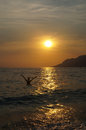 Woman bathing sea golden sunset croatia Royalty Free Stock Photo