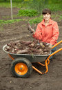 Woman with beetroot harvest Royalty Free Stock Photo