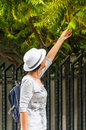 Woman in botanical garden leaf study tourist with white hat and backpack studying leaves from tree or park Royalty Free Stock Image