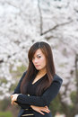 Woman in cherry blossom season korea Royalty Free Stock Photos