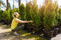 Woman choosing coniferous tree at outdoor plant nursery Royalty Free Stock Photo