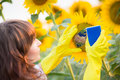 Woman cleaning sunflower outdoors earth day and ecology concept Royalty Free Stock Photo