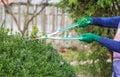 Woman cuts bush Royalty Free Stock Photo