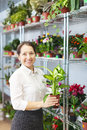 Woman with dieffenbachia plant mature in store Royalty Free Stock Photo
