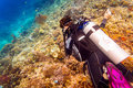 Woman diver at tropical coral reef scuba diving in tropical ocea Royalty Free Stock Photo