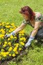 Woman doing some gardening Stock Image