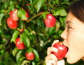 Woman eating apple outside Stock Photography