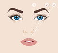 Woman face and eyebrow scheme mapping. Trimming. Vector illust