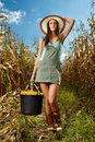 Woman farmer carrying a bucket of corn cobs full in the cornfield at harvest Stock Image
