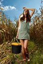 Woman farmer carrying a bucket of corn cobs tired full in the cornfield at harvest Stock Image