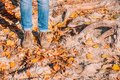 stock image of  Woman Legs In Boots On Autumn Leaves