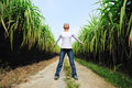 Woman free in sugarcane field Royalty Free Stock Photos