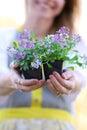 Woman Gardener Holding Sweet Alyssum Flowers in her Hands Royalty Free Stock Photo