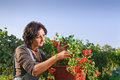 Woman gardening flowers care Royalty Free Stock Photo