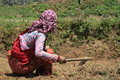Woman are gardening a from nepal is Royalty Free Stock Photos